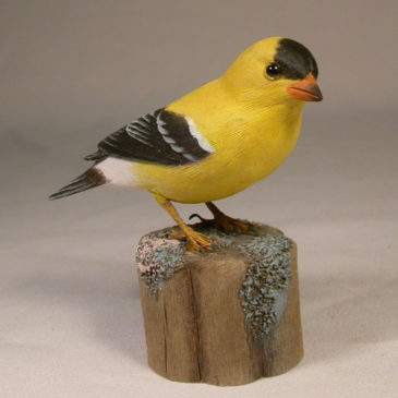 American Goldfinch #6