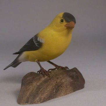 American Goldfinch #8