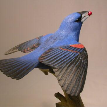 Open-winged Blue Grosbeak (male)